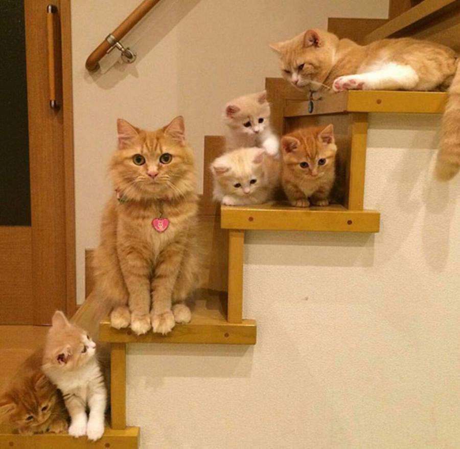 них смешные картинки котов и котенка будто архитектура создана