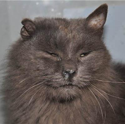 Кот чихает и из носа текут сопли