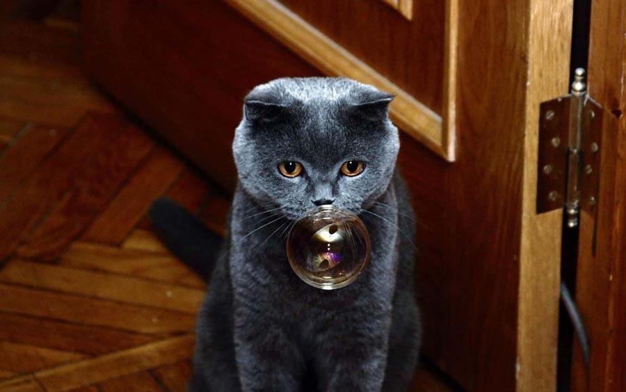 Причины почему кот чихает