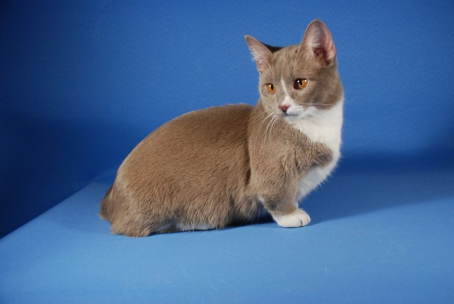Фото хмурой кошки гиф собираются руками