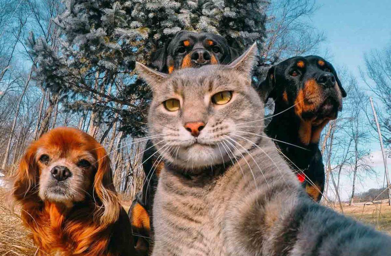 Кот делает селфи на фоне собак, или как Мэнни с собаками покорил ...