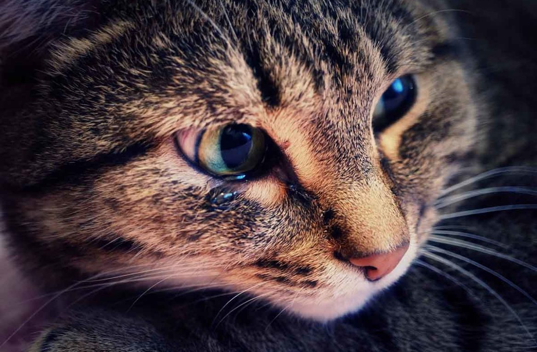 этом картинка плачущего котенка истории этого