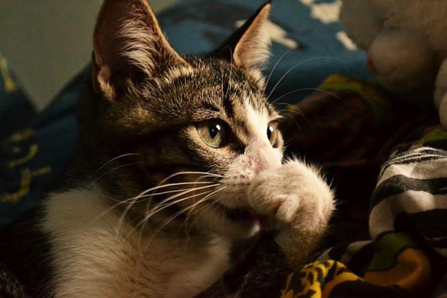 Кот простыл, чихает