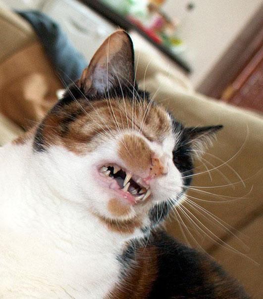 Кот сильно чихает