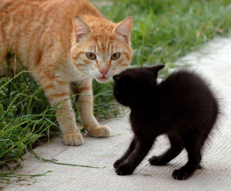 усман демотиваторы кошки коты и котята сети активно
