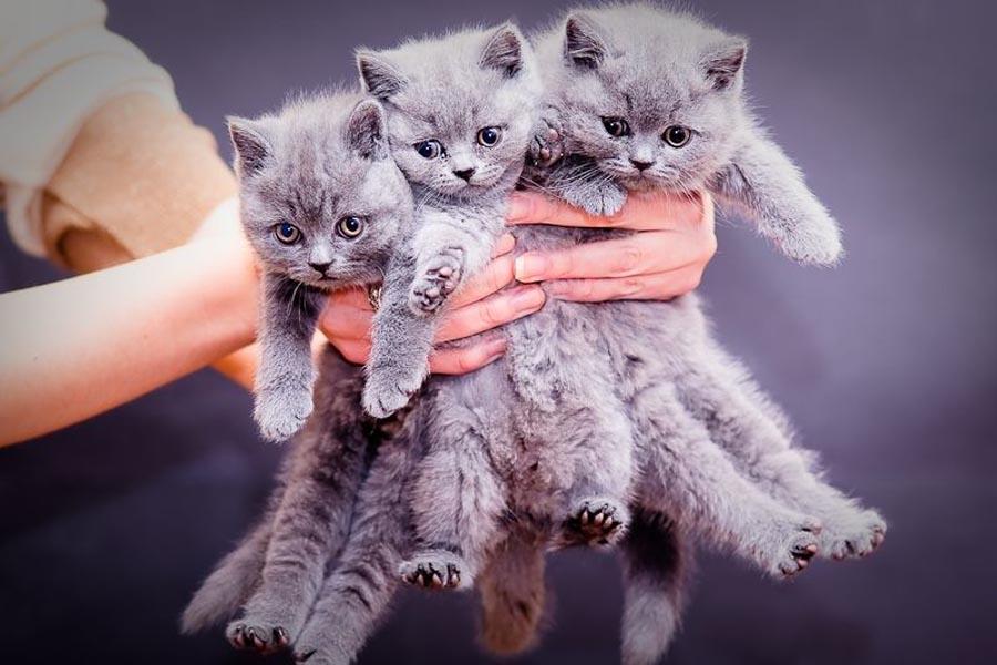 Отдали котят, а у кошки осталось молоко