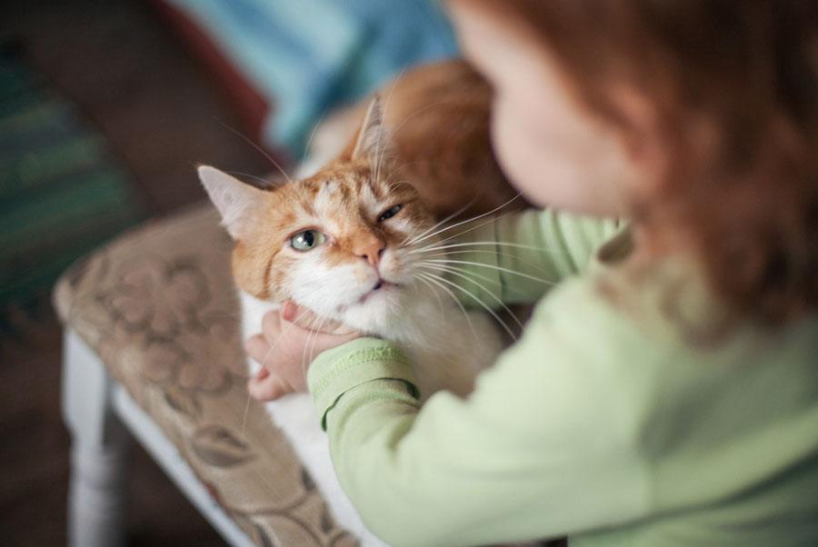 глисты у кошек симптомы фото первые признаки