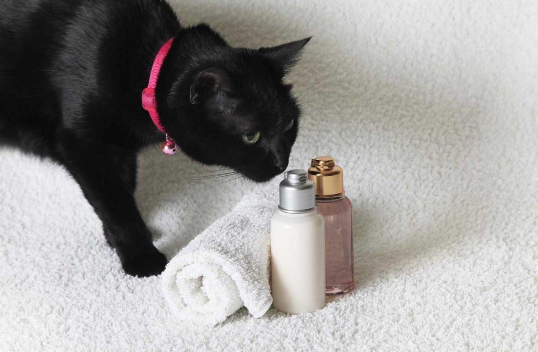 можно ли мыть кошку детским шампунем
