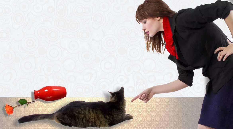 Можно ли наказывать кошку?