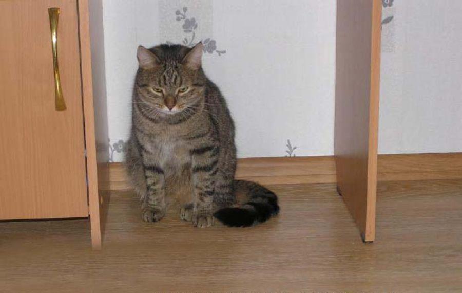 Можно ли наказывать кота