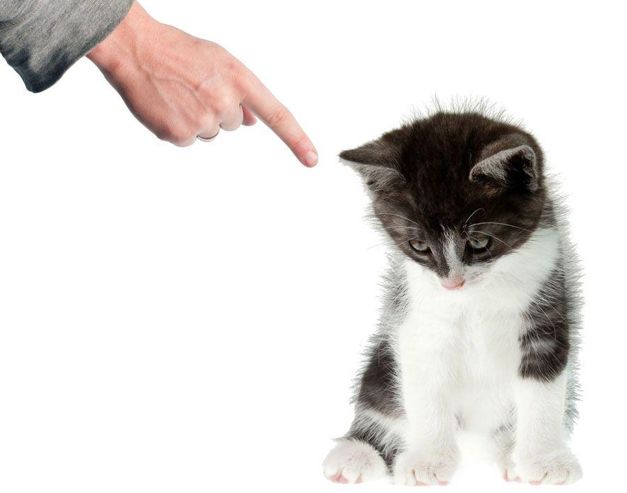 Можно ли наказывать котенка
