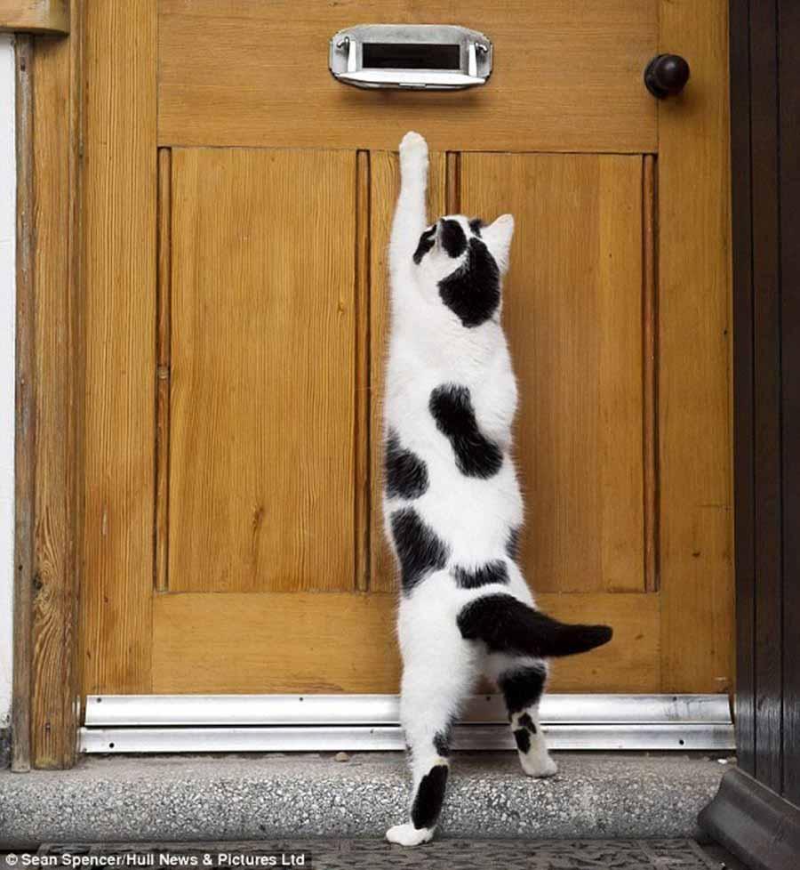 Сочинение рассуждение на тему кошка друг человека 5 класс 9