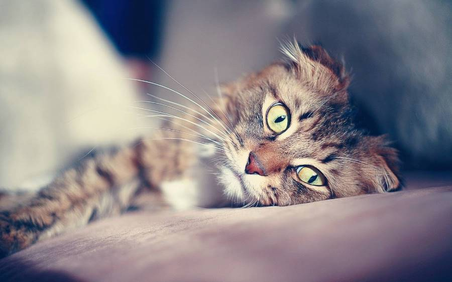Почечная недостаточность у кошки лечение и питание