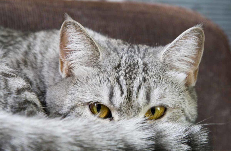 Кровотечение из носа у кошки – причины, болезни, особенности лечения