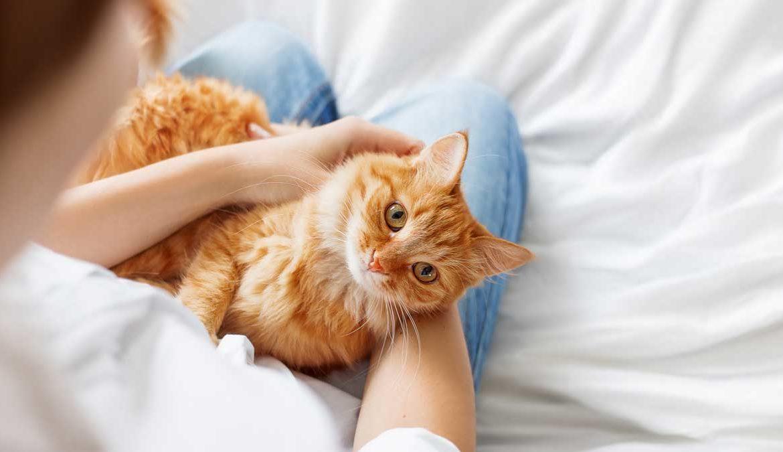 быстро убрать зачем кошка ложится на руку Обучение поддержка первого