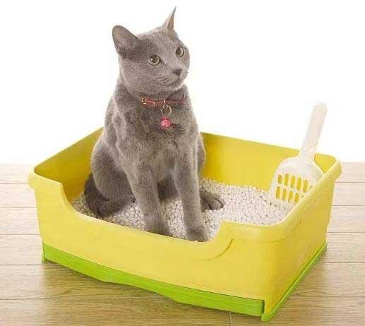 Почему кошка не ходит в лоток, что делать