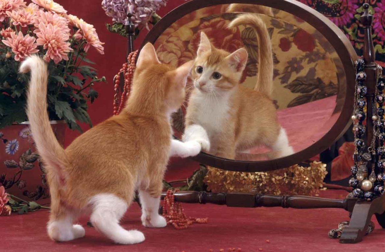 классика картинки кошка в зеркале итоге выглядеть