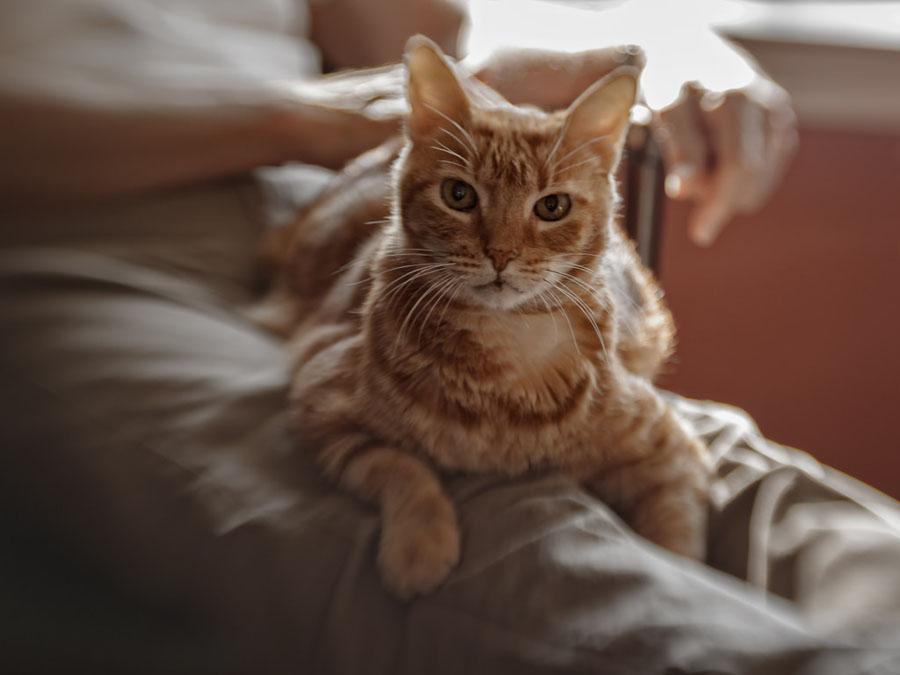Почему кот мнет лапами человека