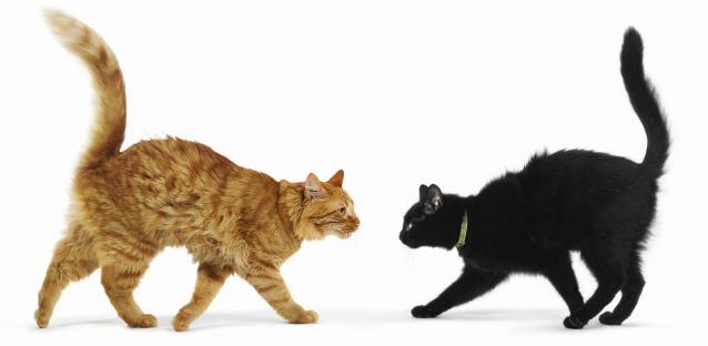 Почему кот не ходит в лоток