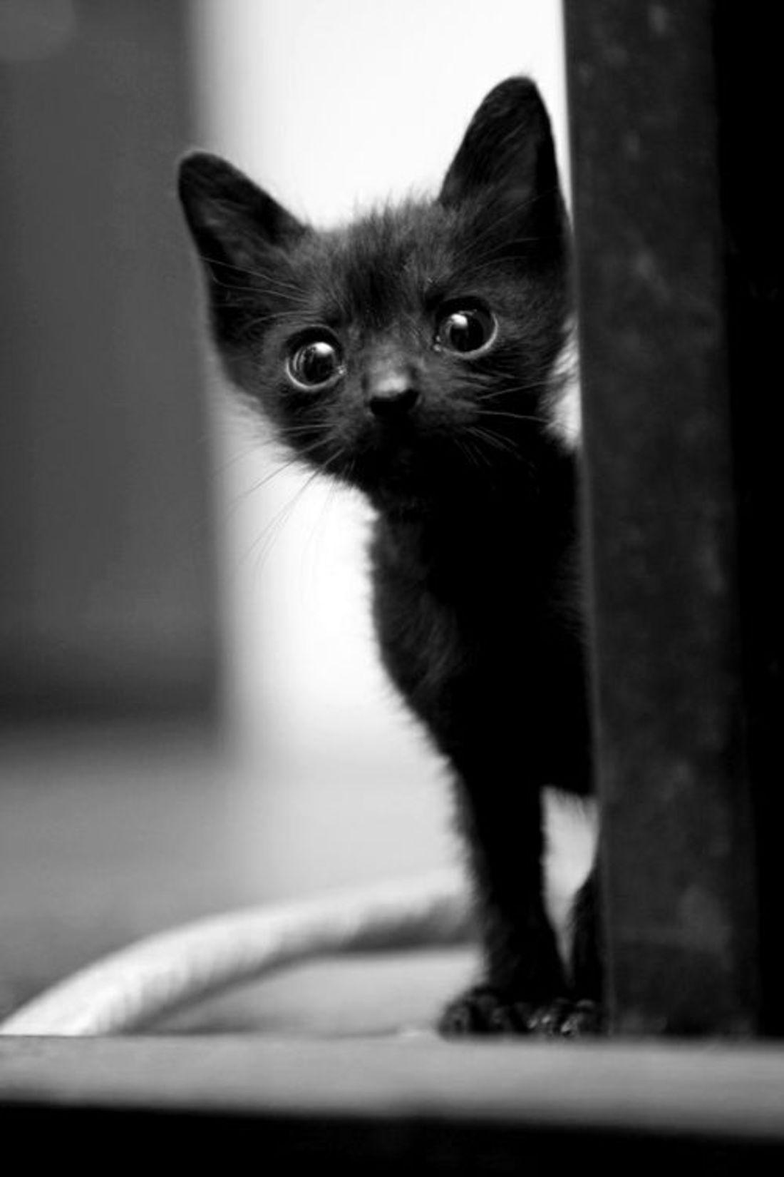 Почему котенок худой