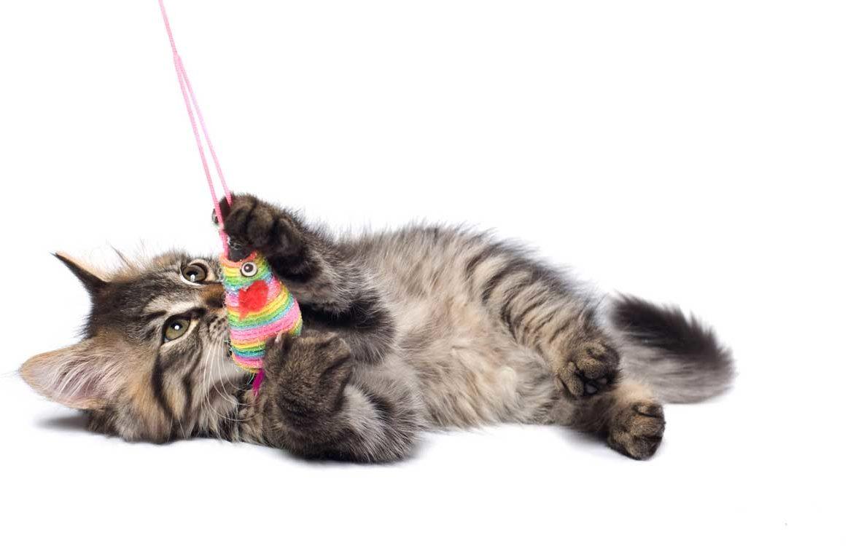 Cats. Купить кошку из цветов. Кошка из цветов