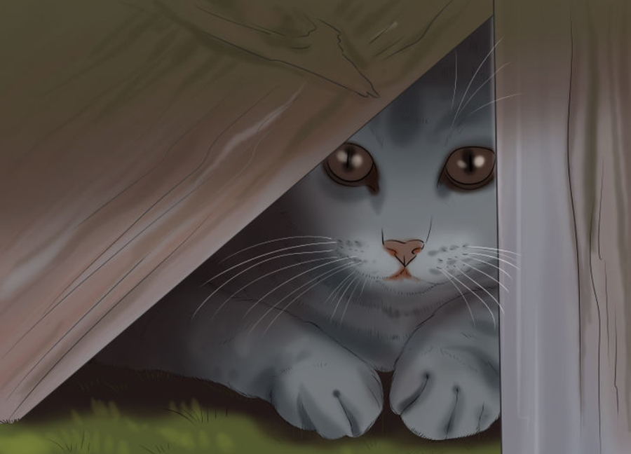Потерялась кошка на даче - как найти