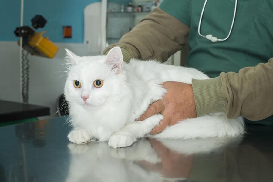 Признаки почечной недостаточности у кошек