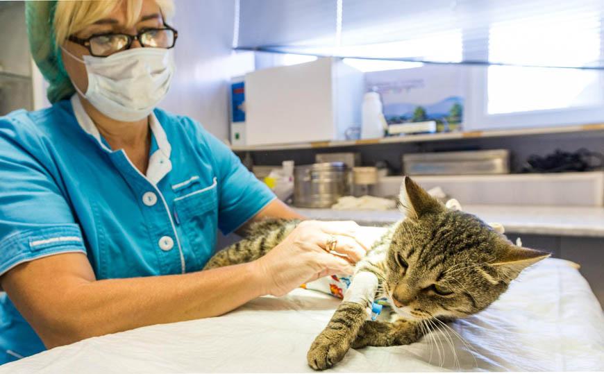 Рак кишечника у кошек симптомы и лечение