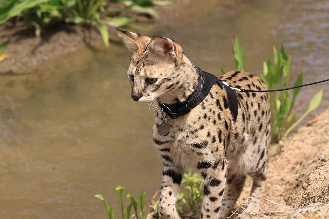 легче найти самые дорогие животные в мире фото словам