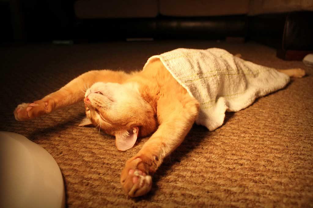 Сонный кот картинки смешные
