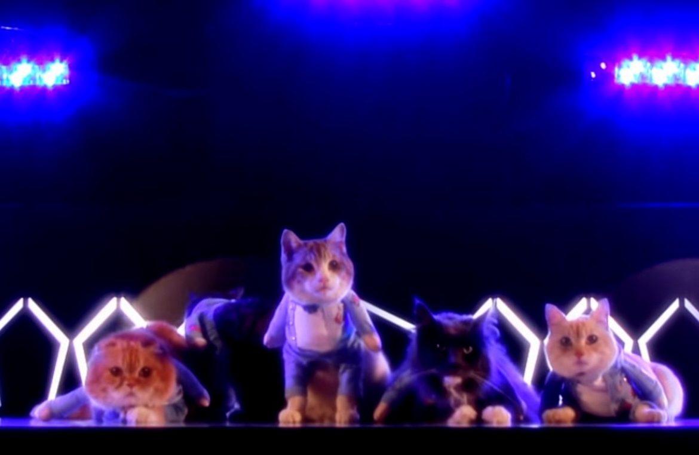Скачать видео поющие котята.