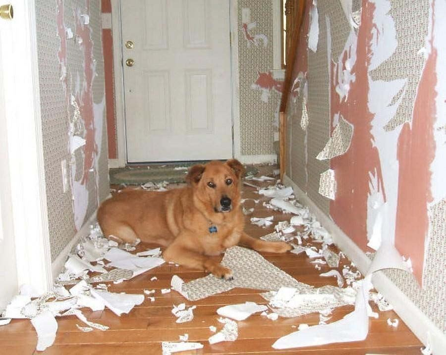 собака не переносит одиночество что делать товарищу, спросил