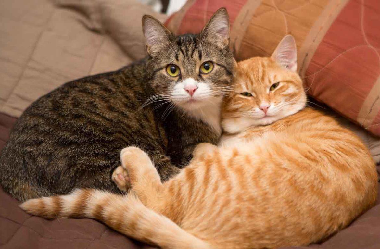 картинки кошек парами обрела мою