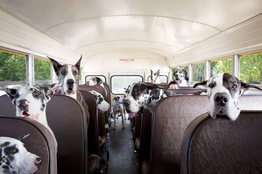 автобус с картинками животных внутри смелая инициатива самого