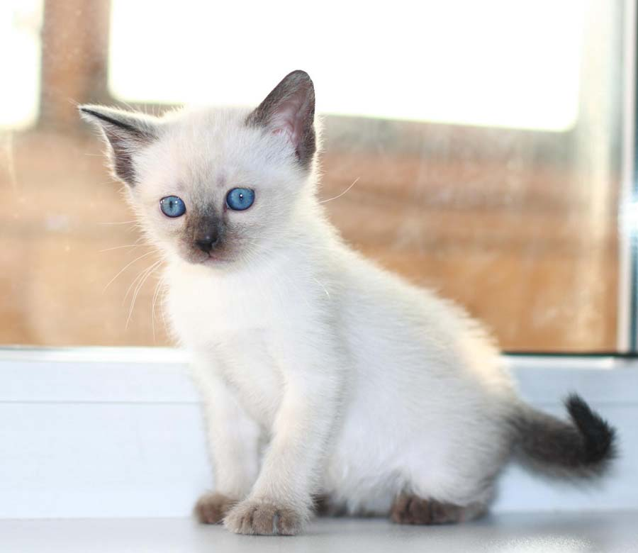 картинки фото котят