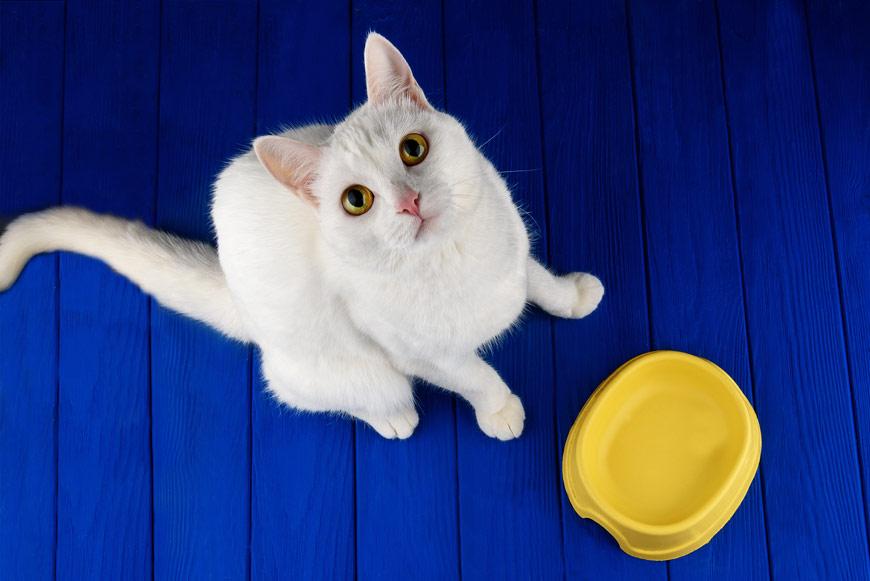 У кота аллергия на курицу, чем кормить