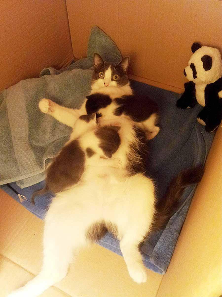 Уход за кошкой и котятами