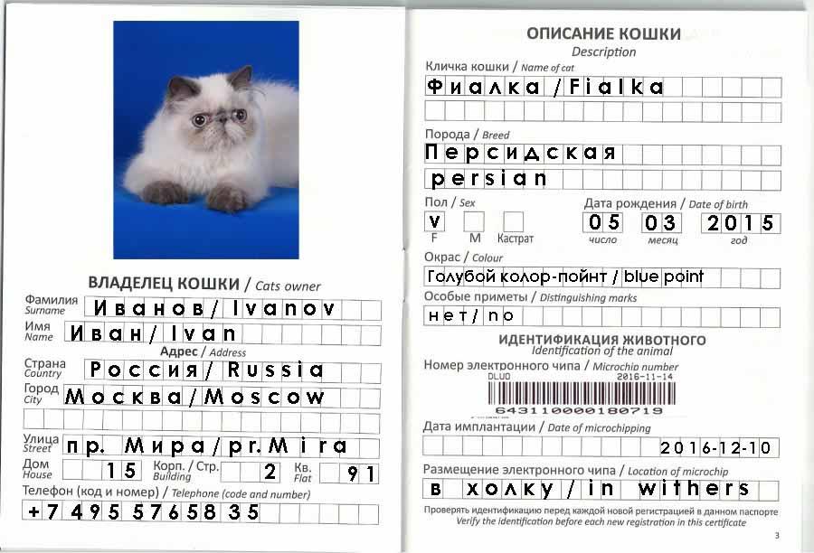 Как сделать паспорт на кота 982