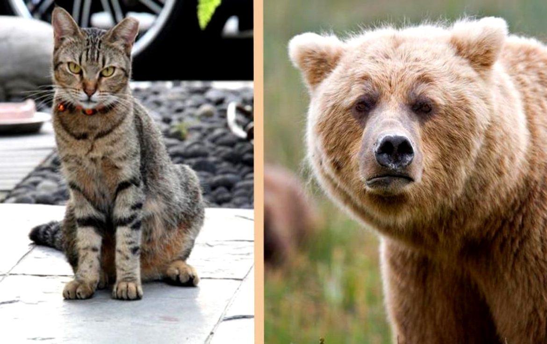Кошки фото красивые и смешные сайте