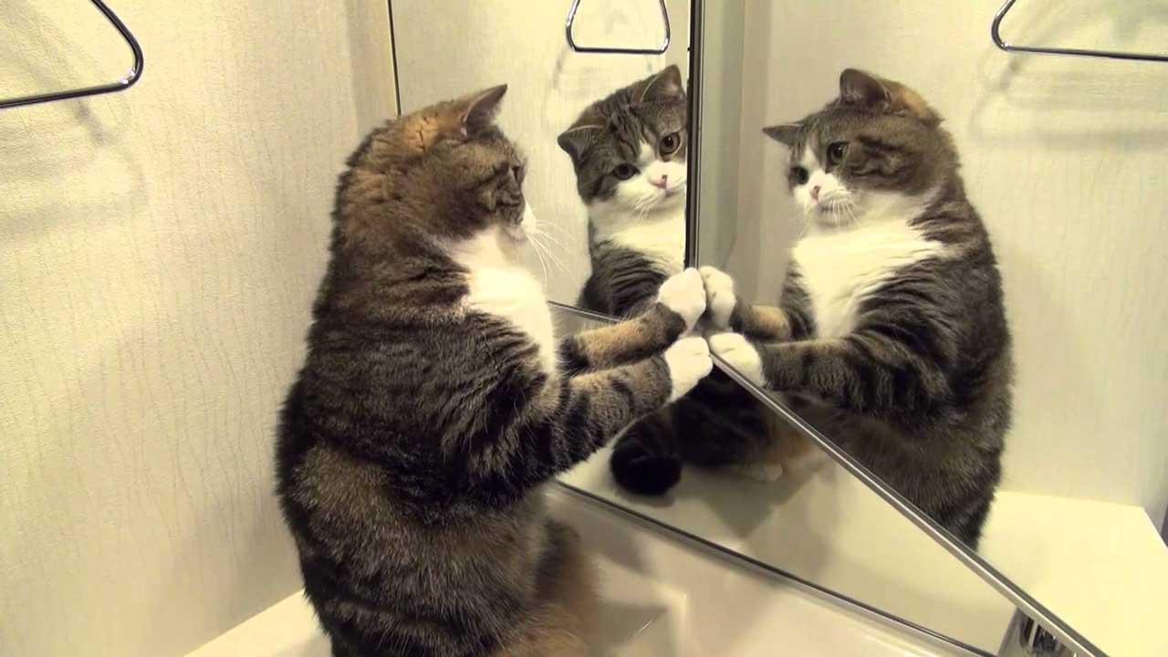 Гифки кошки смешные на ютубе урале смартфоны