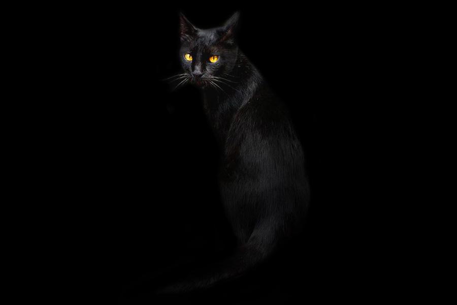 Картинки кота в темноте