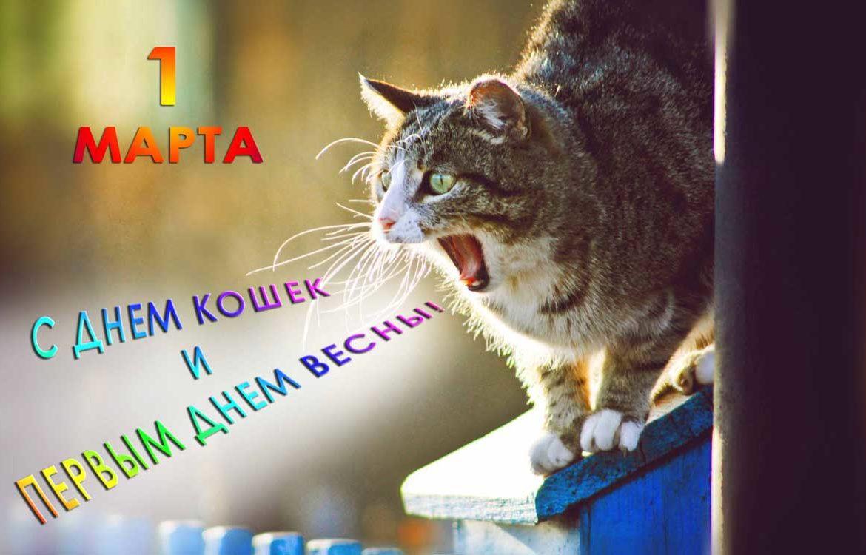 Поздравления с всемирным днем кошек