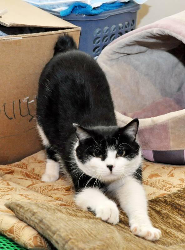 Зачем кошка топчет передними лапами