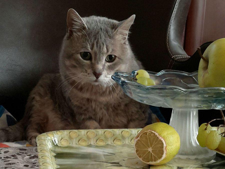Запахи отпугивающие кошек, чтобы не гадили