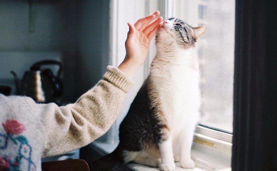 как выводишь глистов у кошек